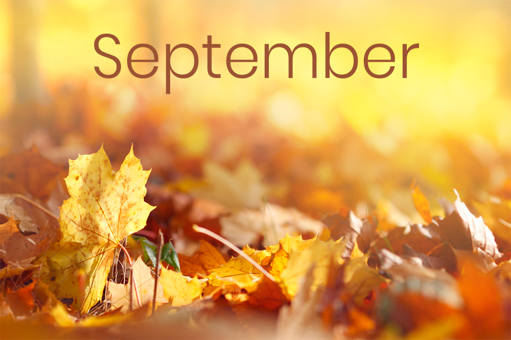 Here is your September support!